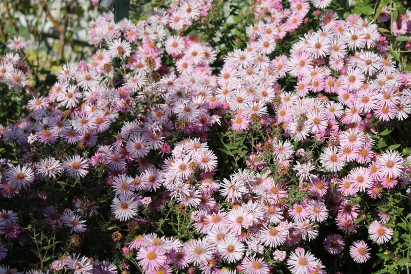 Floraisons du mois de septembre - Page 11 Img_3518