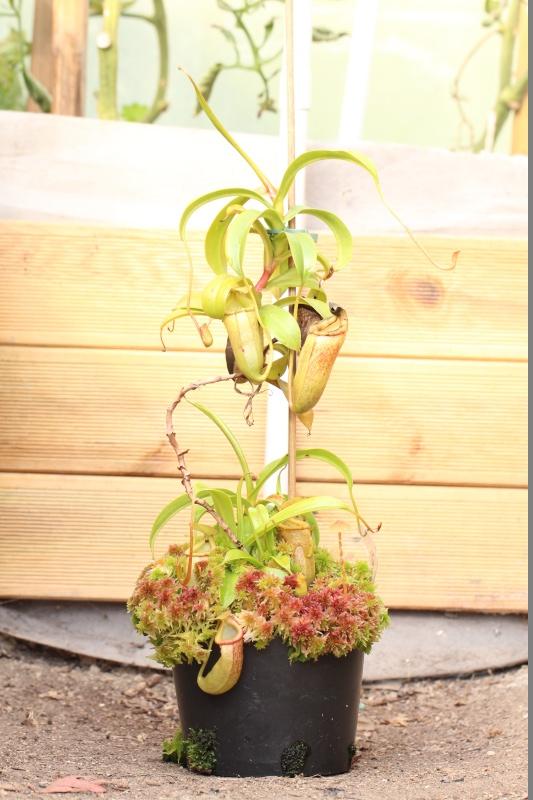 Plantes Phyliok  Photo111