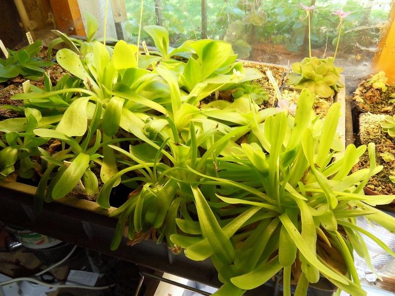Un peu de salade verte ... Sdc15315