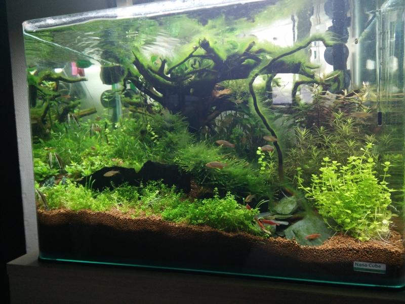 Histoire d'algues... comment s'en défaire ? Help ! Img_2010