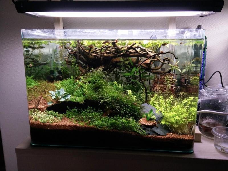 Histoire d'algues... comment s'en défaire ? Help ! Img_2019