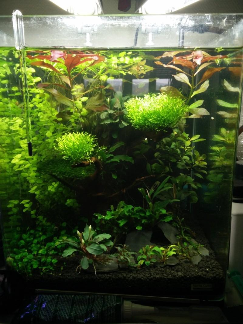 Histoire d'algues... comment s'en défaire ? Help ! Img_2020
