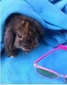 Association White Rabbit - Réhabilitation des lapins de laboratoire - Page 3 Baluch12