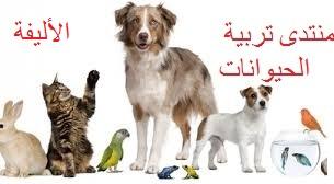 منتدى تربية الحيوانات الأليفة