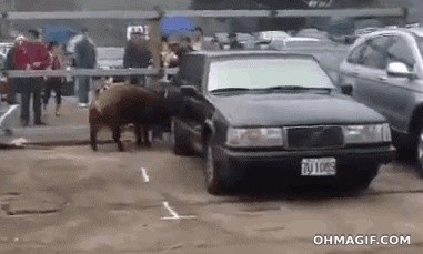 Voiture, créature et Oklahoma… Giphy10
