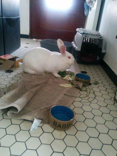 Association White Rabbit - Réhabilitation des lapins de laboratoire - Page 4 Img_2010