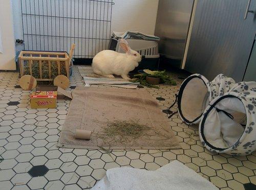Association White Rabbit - Réhabilitation des lapins de laboratoire - Page 4 Img_2011
