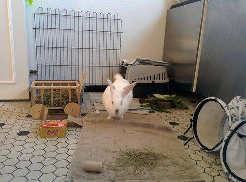 Association White Rabbit - Réhabilitation des lapins de laboratoire - Page 4 Img_2012