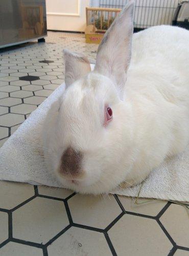 Association White Rabbit - Réhabilitation des lapins de laboratoire - Page 4 Img_2014
