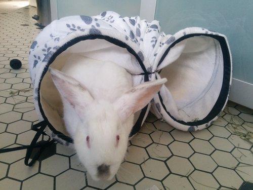 Association White Rabbit - Réhabilitation des lapins de laboratoire - Page 4 Img_2017