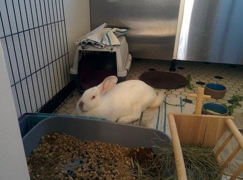 Association White Rabbit - Réhabilitation des lapins de laboratoire - Page 4 Img_2019