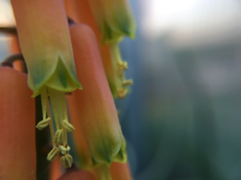 Handyfoto - Seite 3 Aloe11