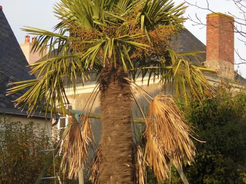 Fibre de palmier !! P1010318