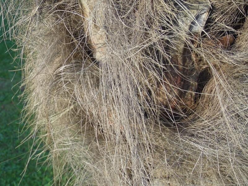 Fibre de palmier !! P1010320