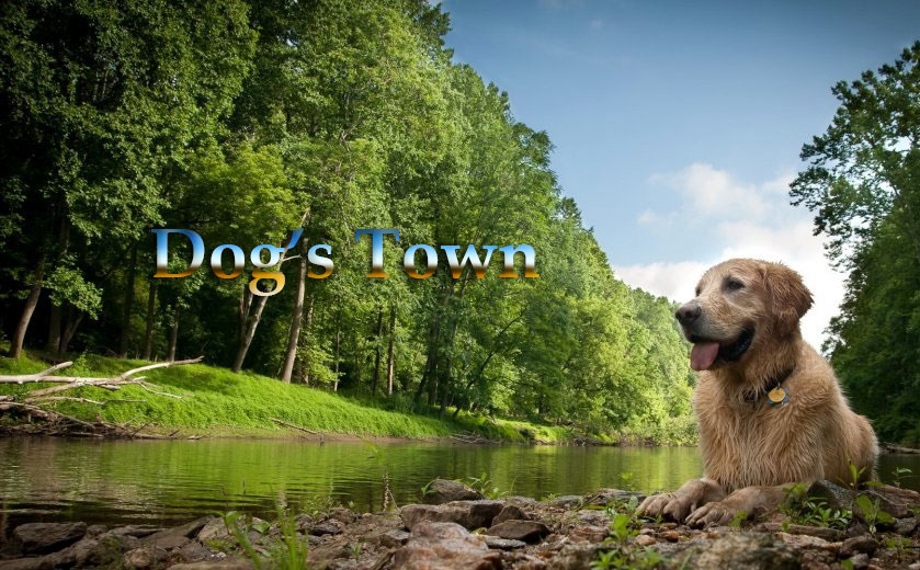 Dog's Town