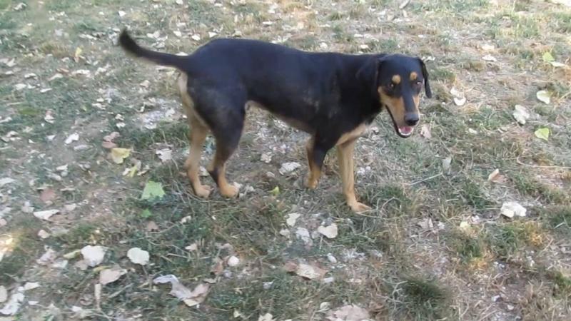 riley - RILEY - Né 2014 - 25 kg - Très gentil loulou - (BELLA) - Prêt à rentrer novembre 2020 Riley10