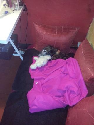 Valentina, petite galga borgne, prise en charge par Scooby France  Adoptée  - Page 2 Val1610