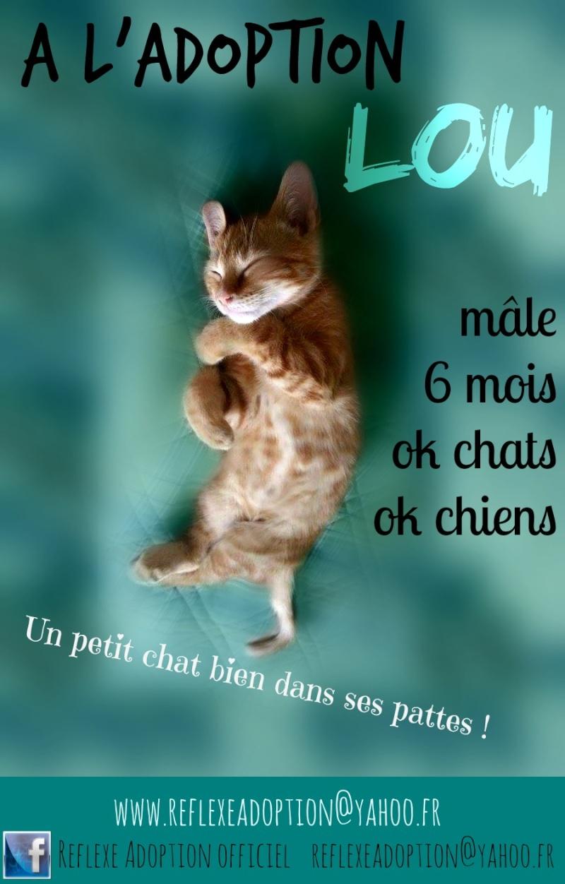 Lou 6 mois - a adopter Lou10
