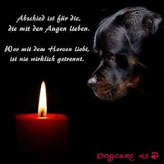 Image Result For Zitate Hund Gestorben