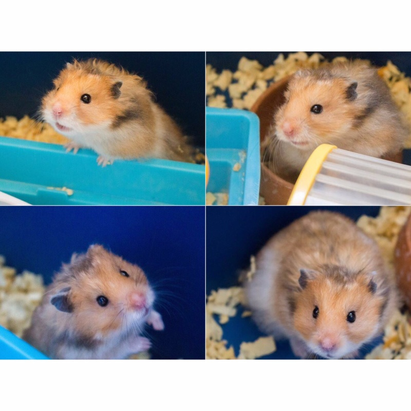 Do you have any pets in your dorm? Image12