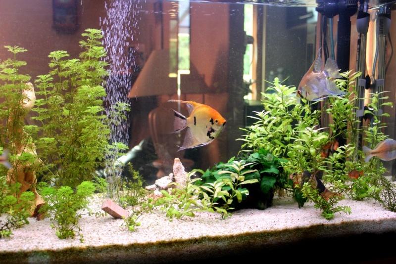 sable d'aquarium 209210
