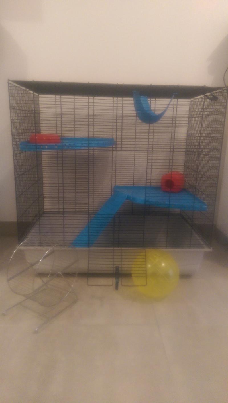 Cage freddy 2 max à vendre  Imag1813