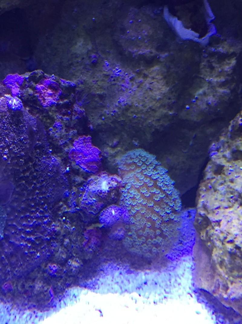 coraux Img_3015