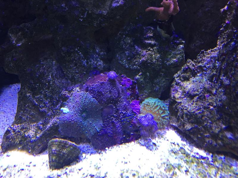 coraux Img_3214