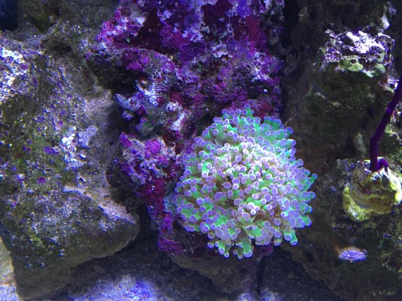 coraux Img_3216