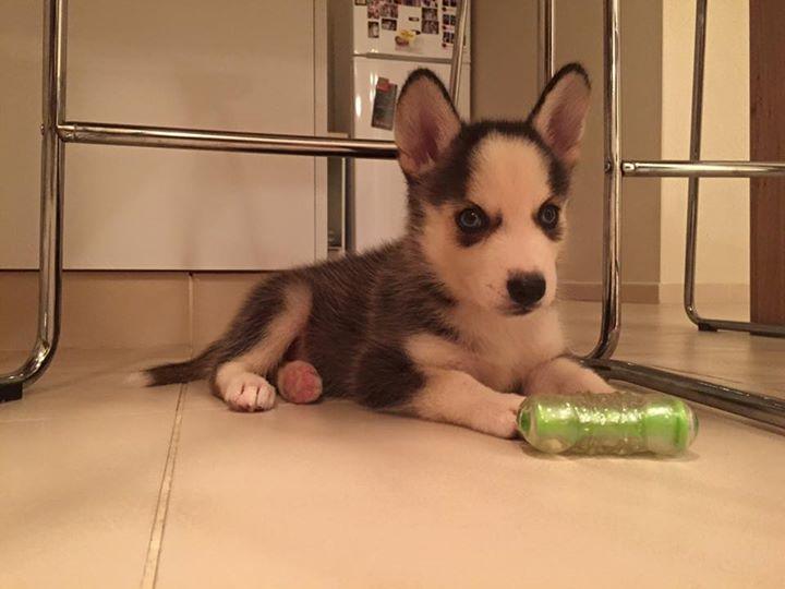 Help!!! New Puppy 11951911