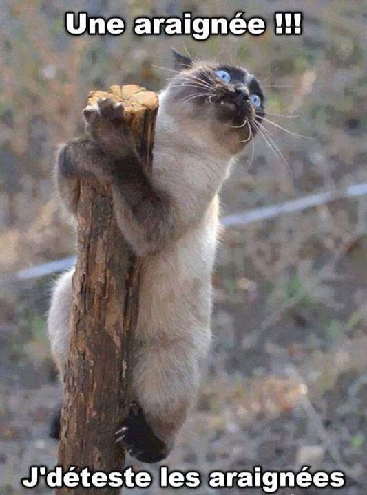 humour sur les chats et compagnie 12193810