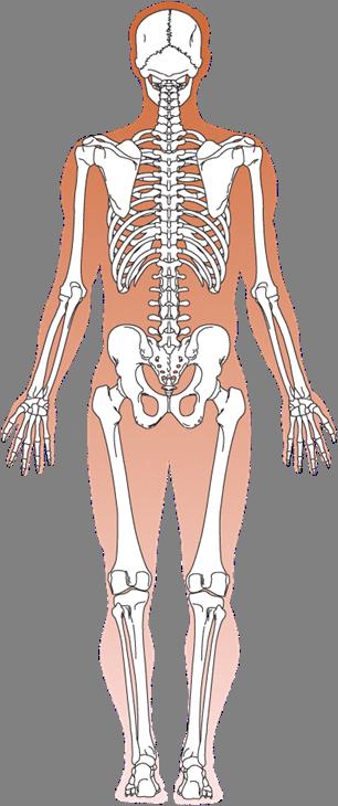 Symbolique du haut du corps - Du cou jusqu'aux mains Articu10