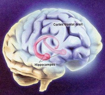 """La science comprend mieux le """"déjà vu"""", la sensation d'avoir déjà vu cet instant Hippoc10"""