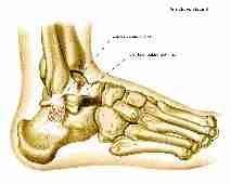 Symbolique du bas du corps - Des hanches aux pieds Pieds10
