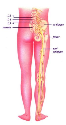 Symbolique du bas du corps - Des hanches aux pieds Sciati10
