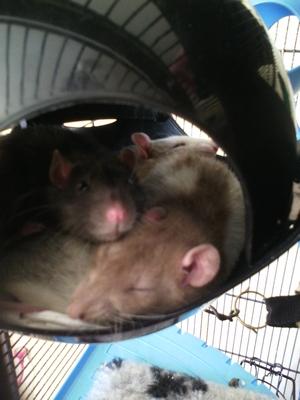 Ripley et Roberta (et Shiagur) Img_2029