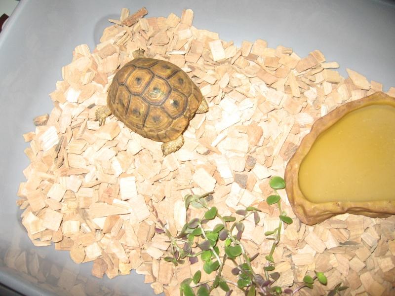 Kit d'urgence pour maintien de tortue terrestre 0110