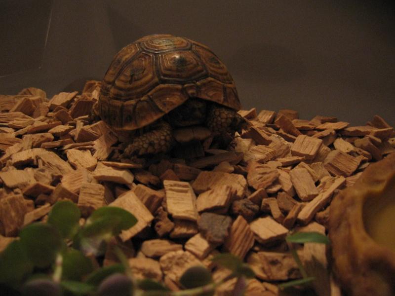 Kit d'urgence pour maintien de tortue terrestre 0210
