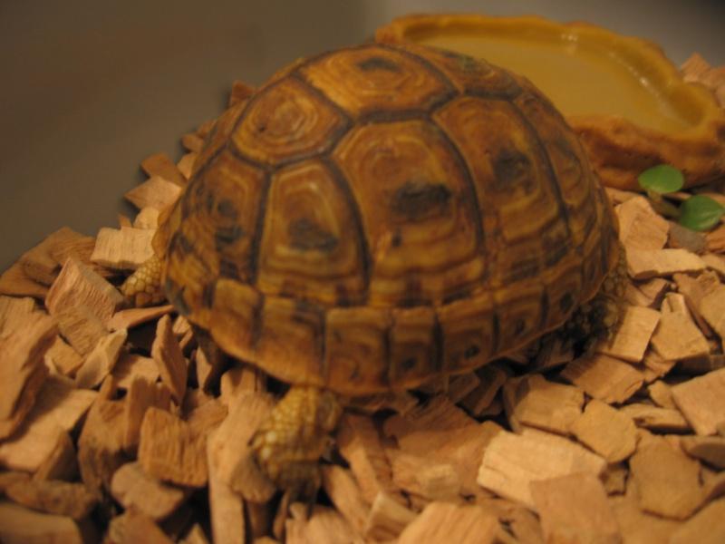 Kit d'urgence pour maintien de tortue terrestre 0510