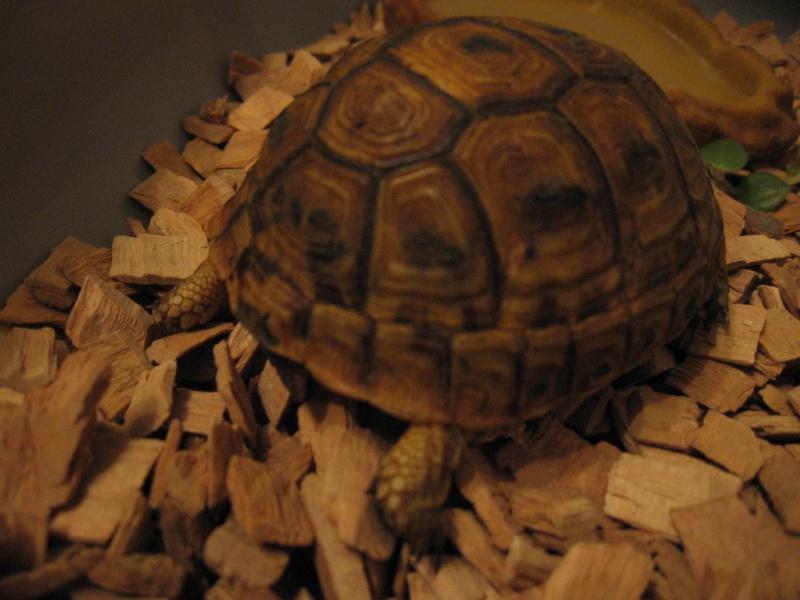 Kit d'urgence pour maintien de tortue terrestre 0610