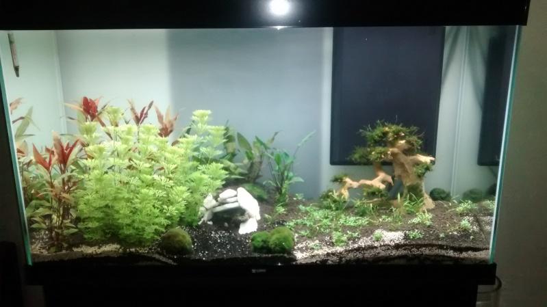 Mon aquarium de 240 litres  Img_2013