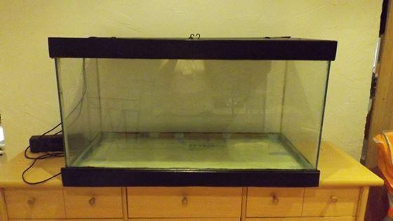 mis à eau aquarium 250l 11999010