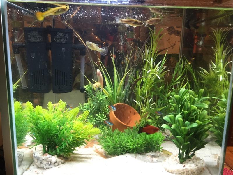 Problème beaucoup de mort dans mon aquarium Img_0211