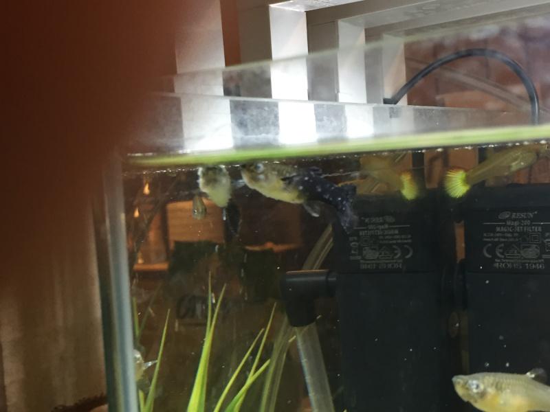 Problème beaucoup de mort dans mon aquarium Img_0212