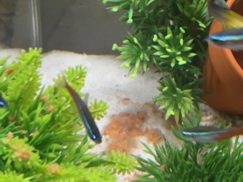 Problème beaucoup de mort dans mon aquarium Img_0213