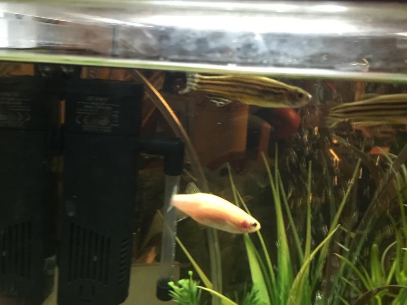 Problème beaucoup de mort dans mon aquarium Img_0214