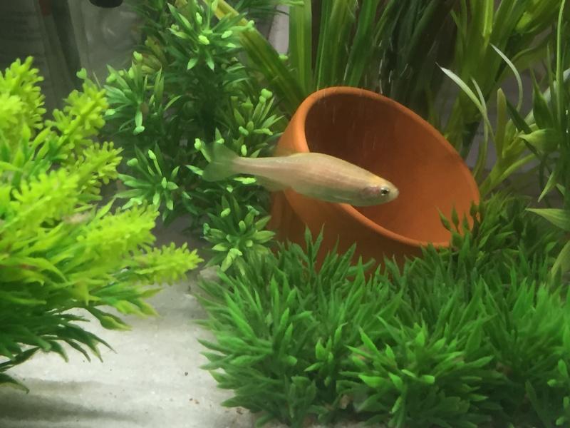 Qui peut m'aider à identifier un poisson ? Img_0216