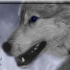Les images des loups Imrivi10