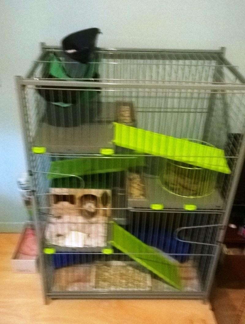 Cage maxi loft?  Wp_20113
