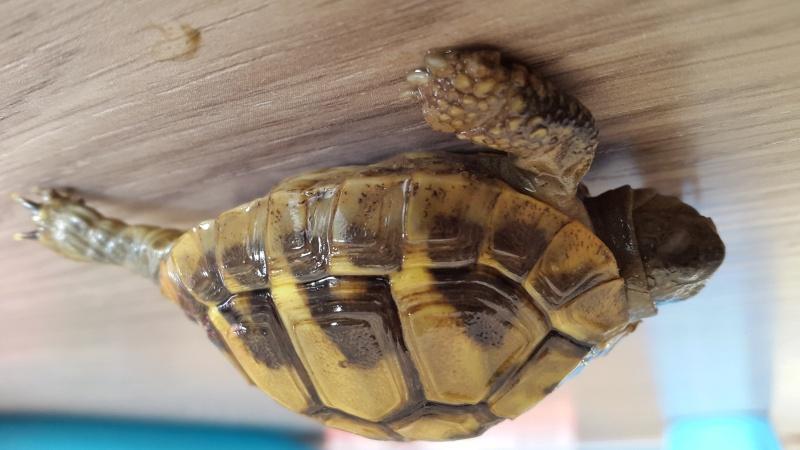 Identification de 2 bébés tortues  20150914